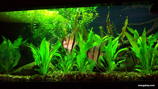 The best books on biotope aquariums for Amazon fish tank